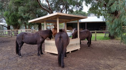 our new hayfeeder