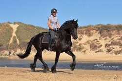 Wilbert van Gelder, stallion at Twin Rivers Friesan Horse Stud