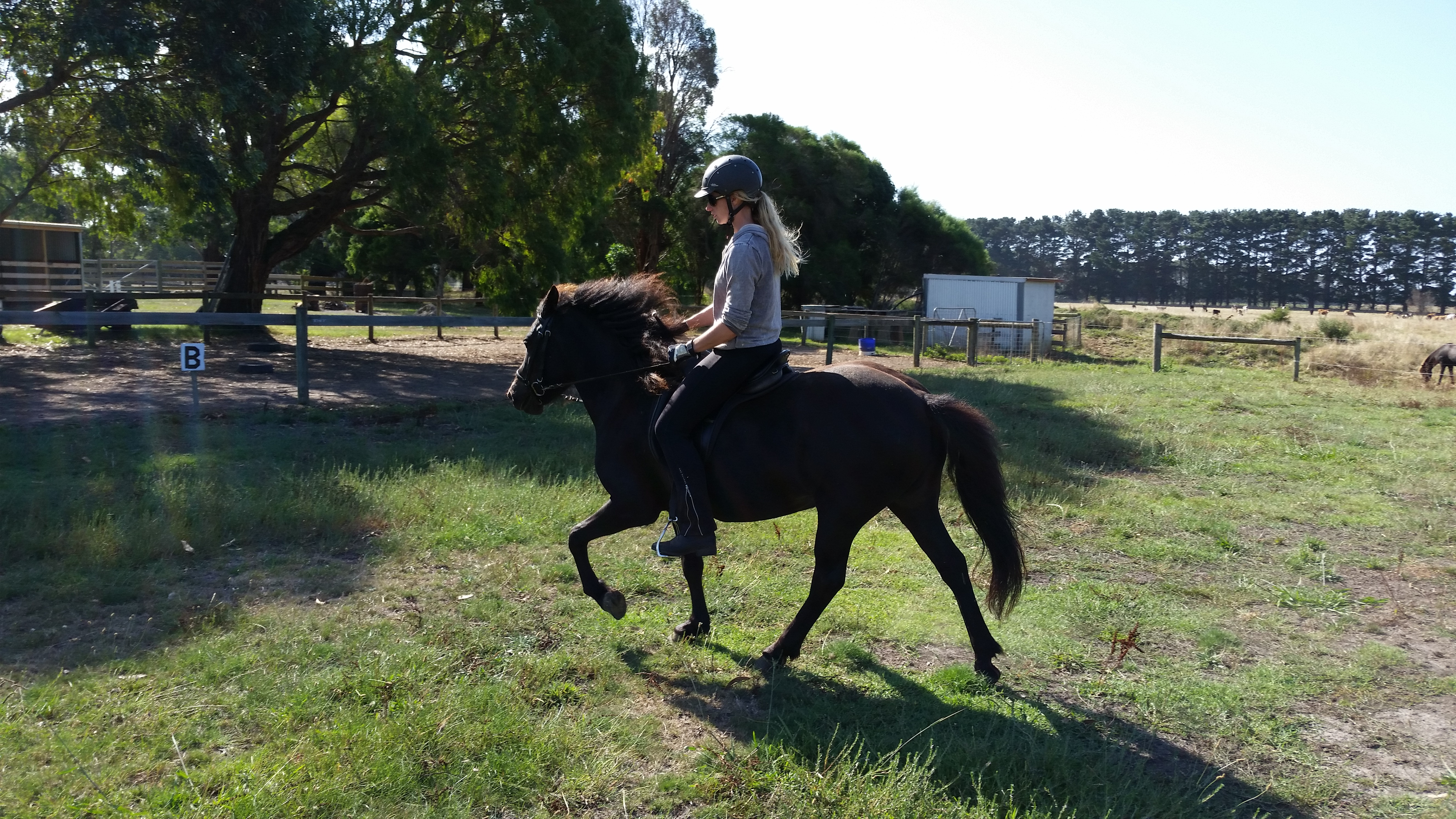 Elja just started under saddle