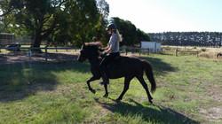 Elja just started under saddle