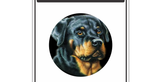 Placa Cuidado Cão Bravo