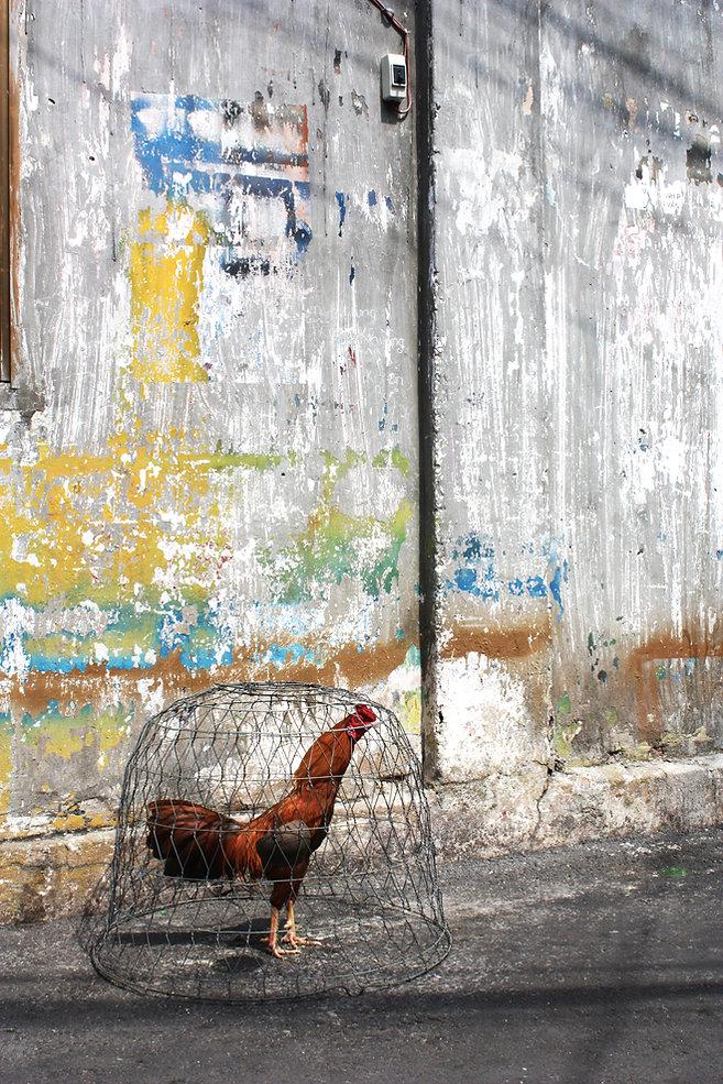 StoryOfWall_194_rooster.jpg