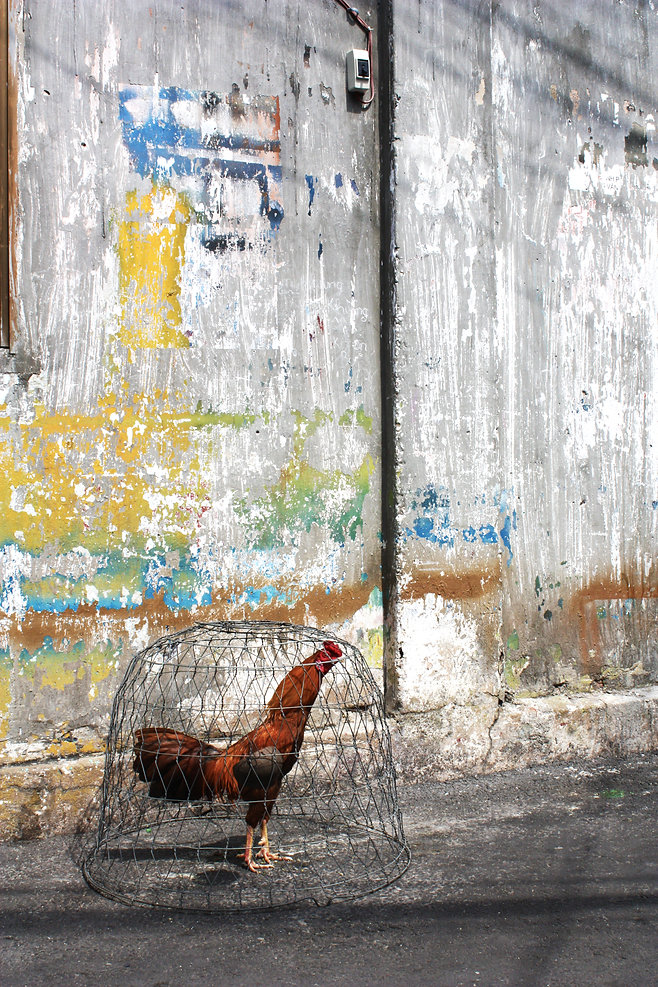 StoryOfWall_194_rooster.jpg