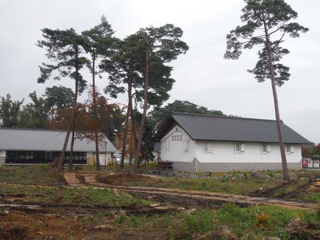 道の駅石鳥谷 赤松の伐採