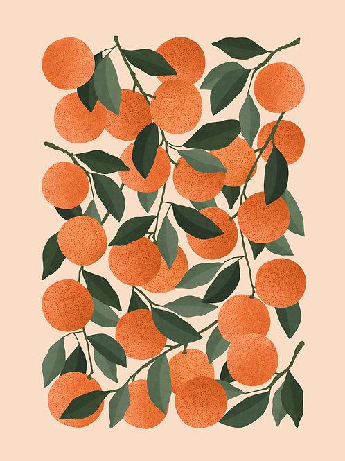 Oranges - A3