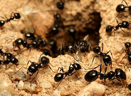 De mierenhoop: een beetje hoop…