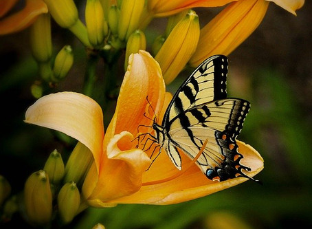 How about a Butterfly Garden?