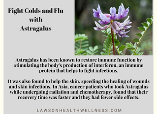 Fight Colds with Astragalus