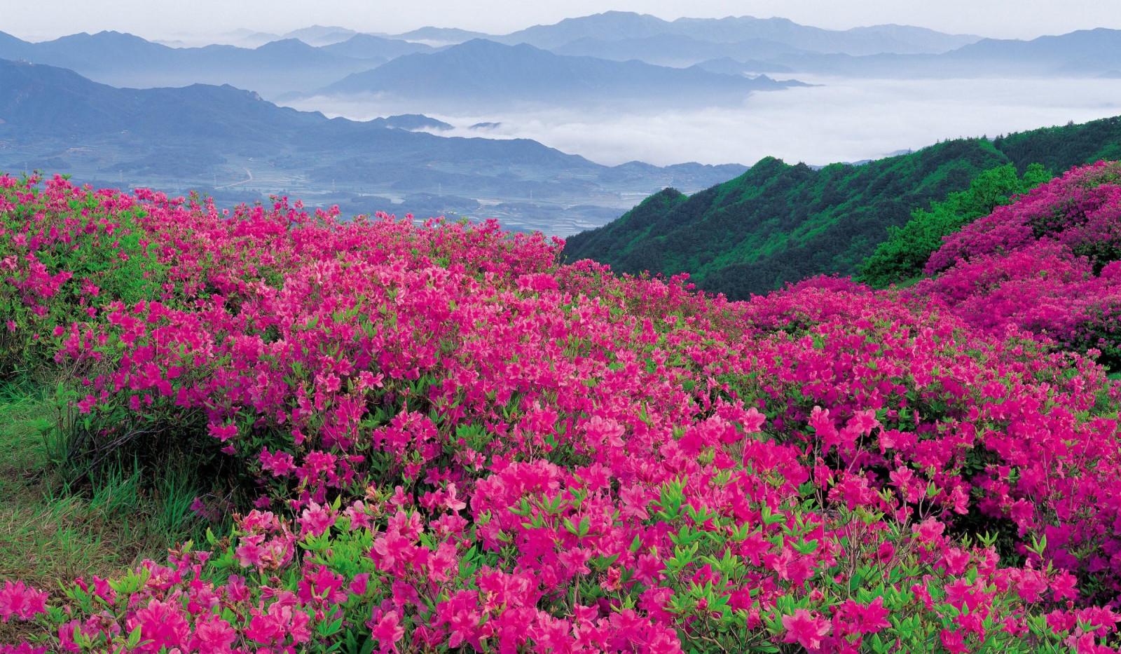 Blue Ridge Mountains in Spring