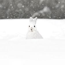 annexe-faune-hiver-julie-galerie-11.jpg