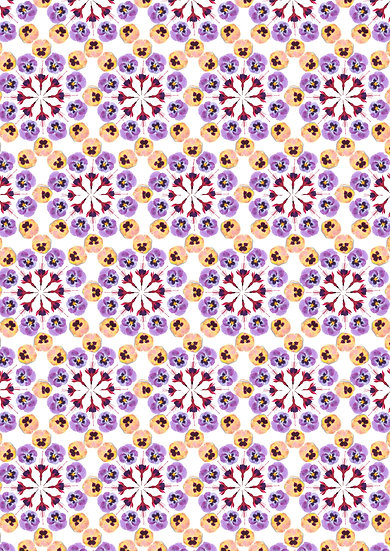 Fuchsia Pansy Purple