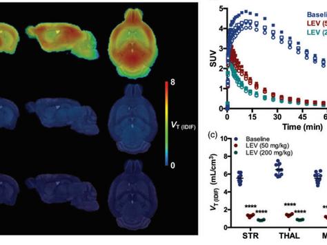 Measuring synaptic density in mice