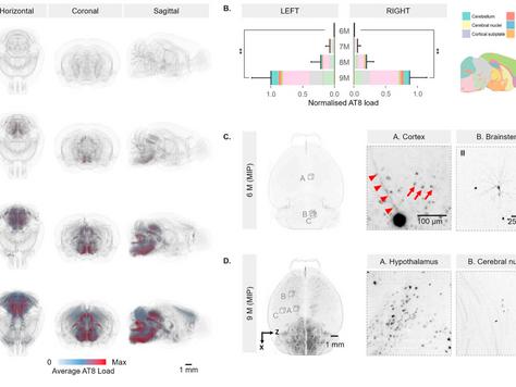 Measuring tau deposition patterns in mice