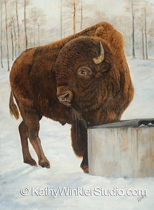 """A Refreshing Pause"" Bison Bull Giclée"