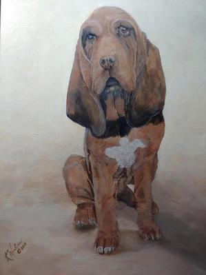 King - Bloodhound