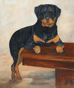 Negra - Rottweiler