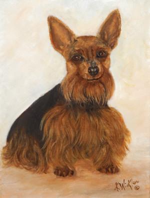 Angel - Yorkshire Terrier