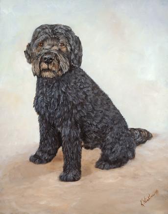 Max - Portugese Waterdog