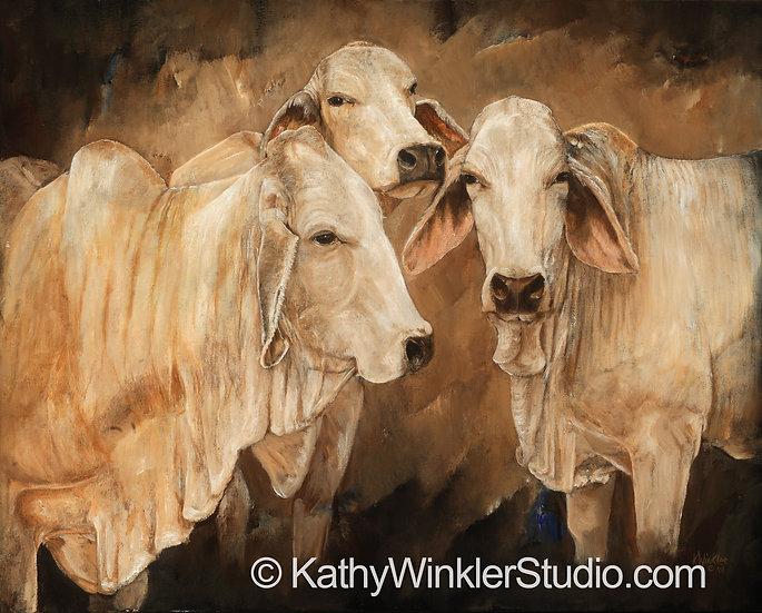 """Did You Hear About…"" Brahman Cows Giclée"