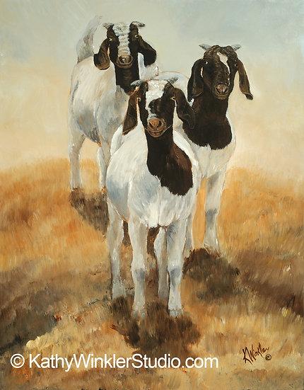 """""""Tres Amigos"""" Goats,  Giclée"""
