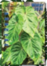 Araceae Winter (Cover).jpg