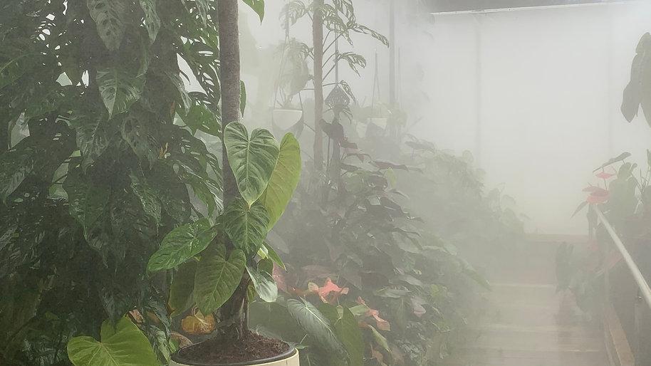 Araceae Cloud Forest