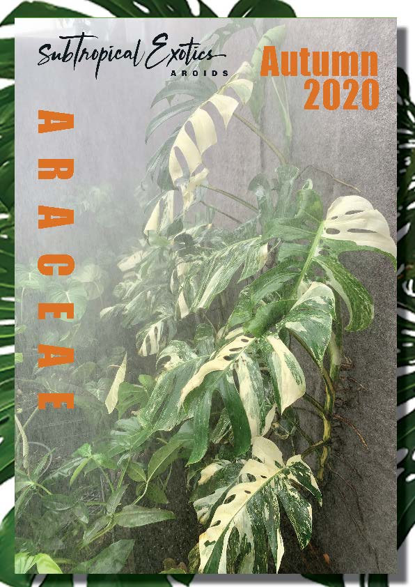 subTropical Newsletter Autumn 2020 Cover