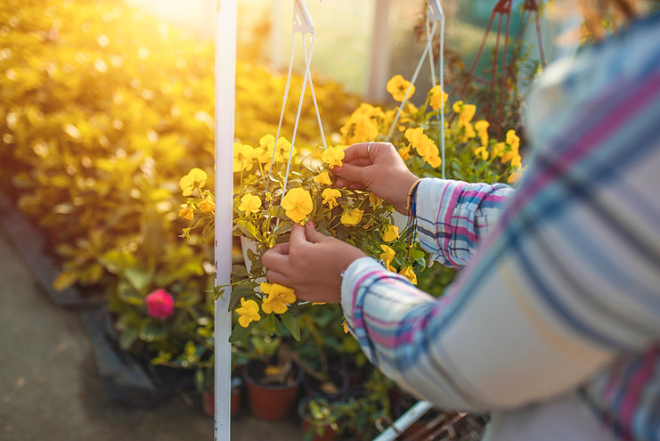 Woman take care flowers at garden plant