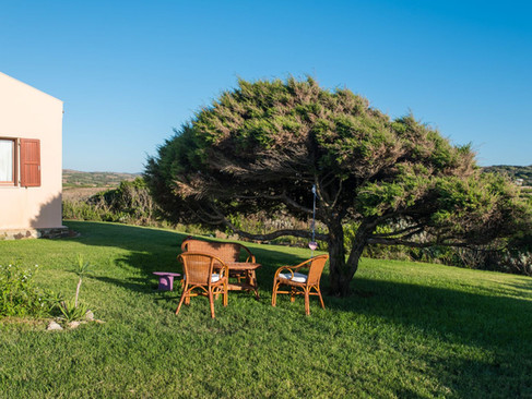 Il giardino e l'albero di ginepro