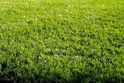 playground-artificial-grass.jpg