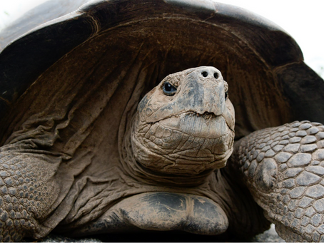 Check Off Your Bucket List: Galapagos Islands