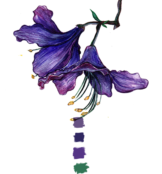 lily purple.png
