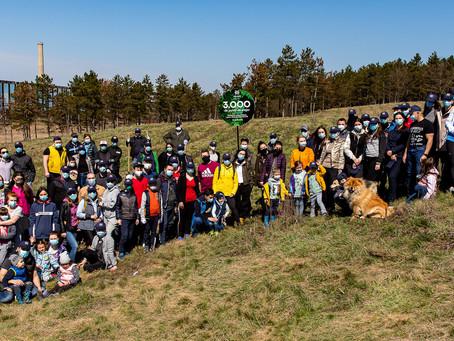Angajații IULIUS au plantat 3.500 de copaci pentru un viitor cu aer mai curat în Iași și Suceava