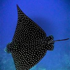 diving 7.jpg