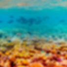 diving 5.jpg