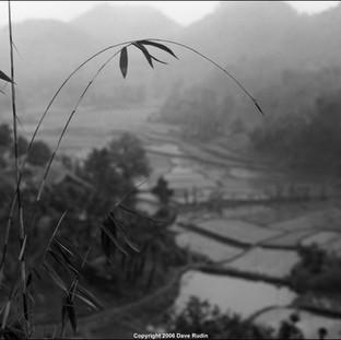 Rice Field, Northern Vietnam, 2006