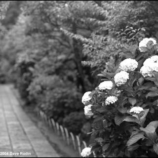 Garden, Tokei-ji Temple, Kamakura, 2004