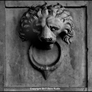 Lion, Rome, 2017