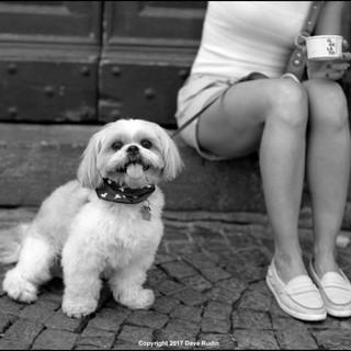 Dog, Orvieto, 2017
