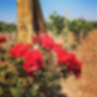VR Actual Roses.jpg