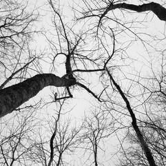 Chatting Trees.jpg