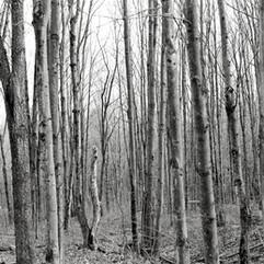 trees_vert1_bnw_000035250015.jpg