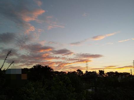 早朝ログ散歩