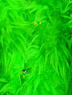 Grön päls (kopia).jpg