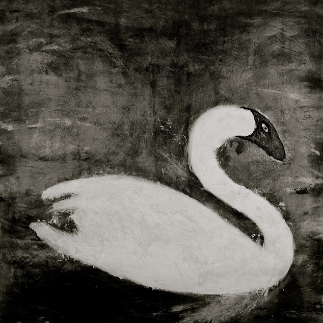 The lone swan