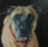 painting of a dog german shepherd boxer mix black background