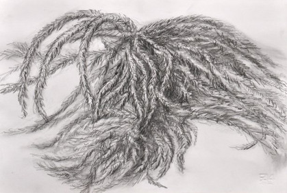 "From the series ""Flora Hierosolymitana"": ""Leaf"", 2013"