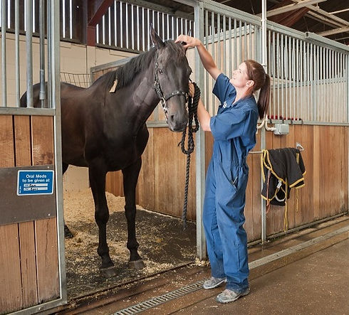 equine-hospital-stabling_edited.jpg