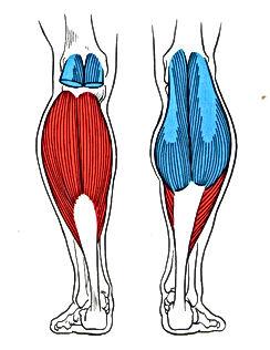 The Fitness Digest-kenya Home Variation-Calf Raises