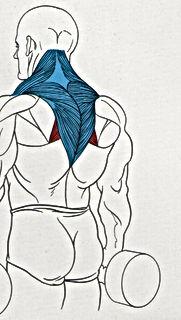 The Fitness Digest-Kenya-Dumbbell Shrugs